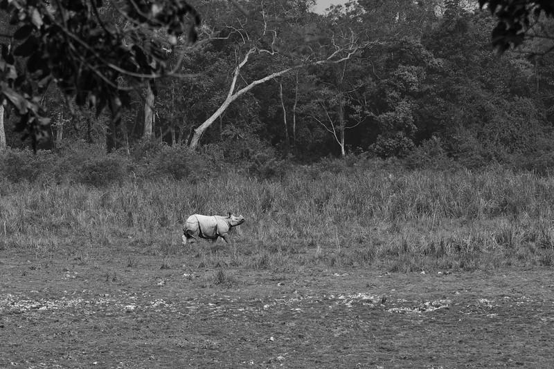Rhino-Scape-BW.jpg