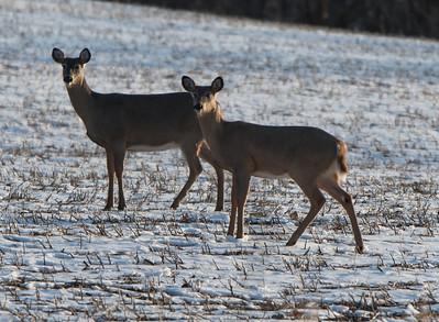 03-12-2018-deer