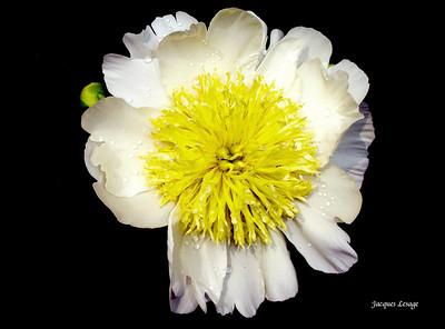 Fleurssauvagesetdejardin