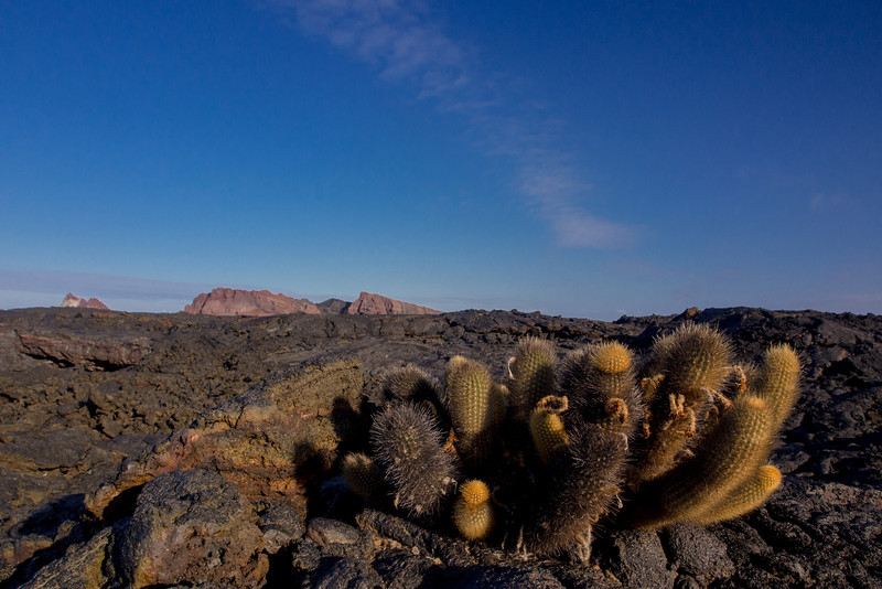 new island cactus.jpg