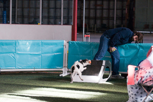 Flyball - Vallejo Jan. 2009
