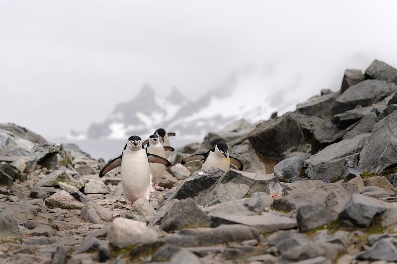 Antarctica-1423.jpg