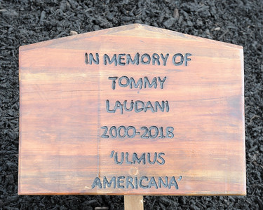 19 TOMMY LAUDANI  MEMORIAL TREE CEREMONY