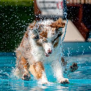Splash 5