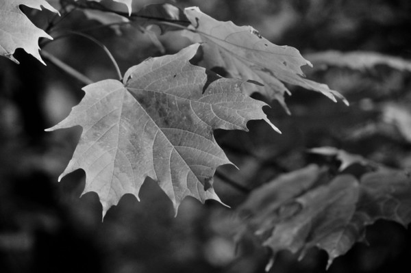 Autumn (B & W)