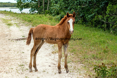 Diamond's Jewel's Filly