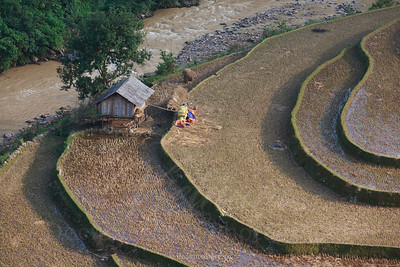 Mu Cang Chai in rice harvest season