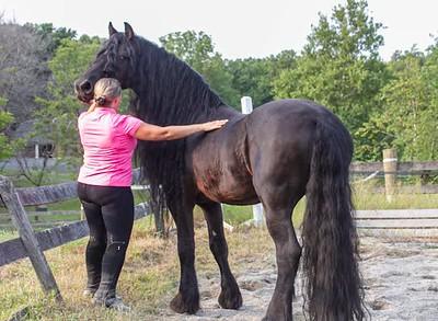 Horse Sales Videos