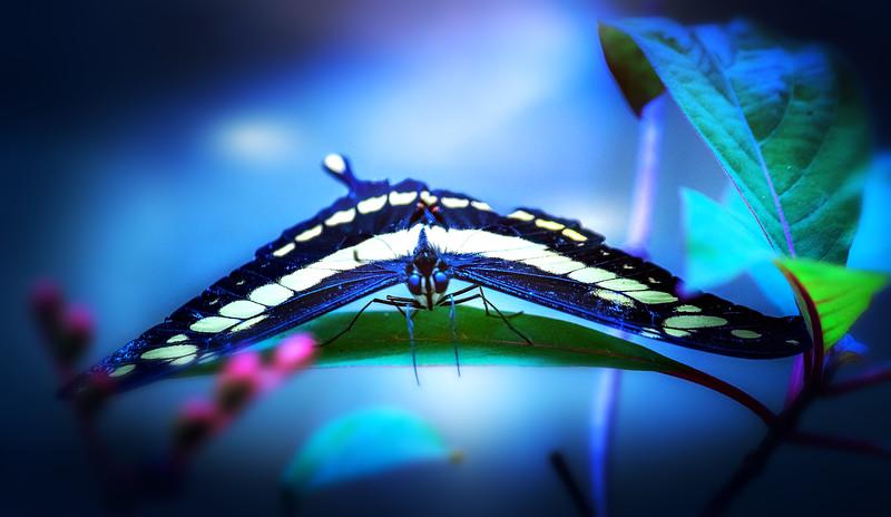 Butterfly-207.jpg