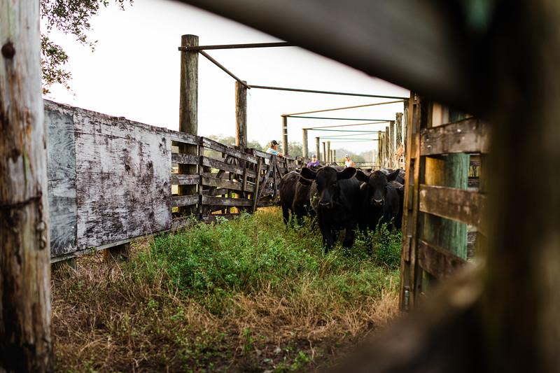 Barthle Cattle-2 (28 of 102).jpg