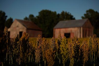 Stoakley Farms