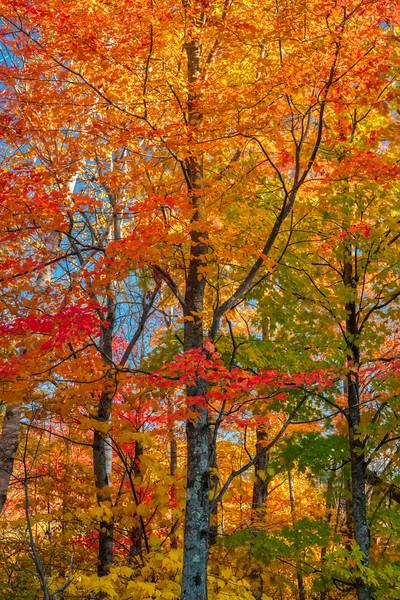 Maine Fall 2019-39.jpg