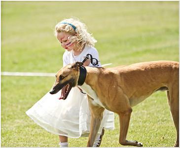Retired Greyhound Shows