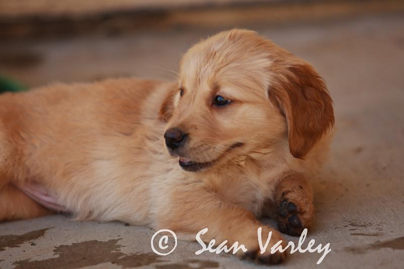 2011.04.16 Daisy 0104.jpg