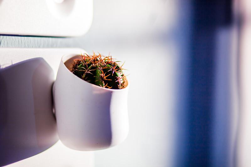 2014-06-18-RockettLab-Succulents-4.jpg