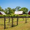 Vineyard in Smithfield