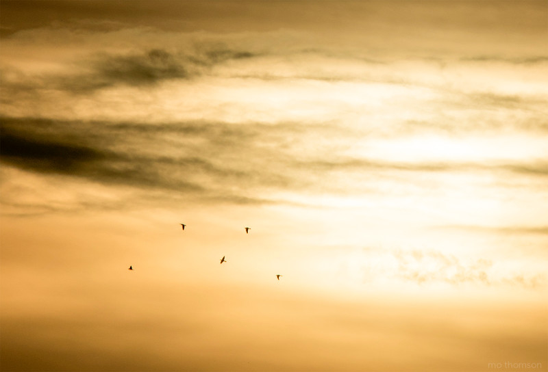 sunbirds.jpg