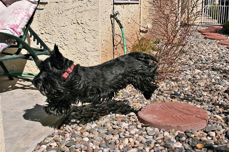 Gus makes final jump to the patio