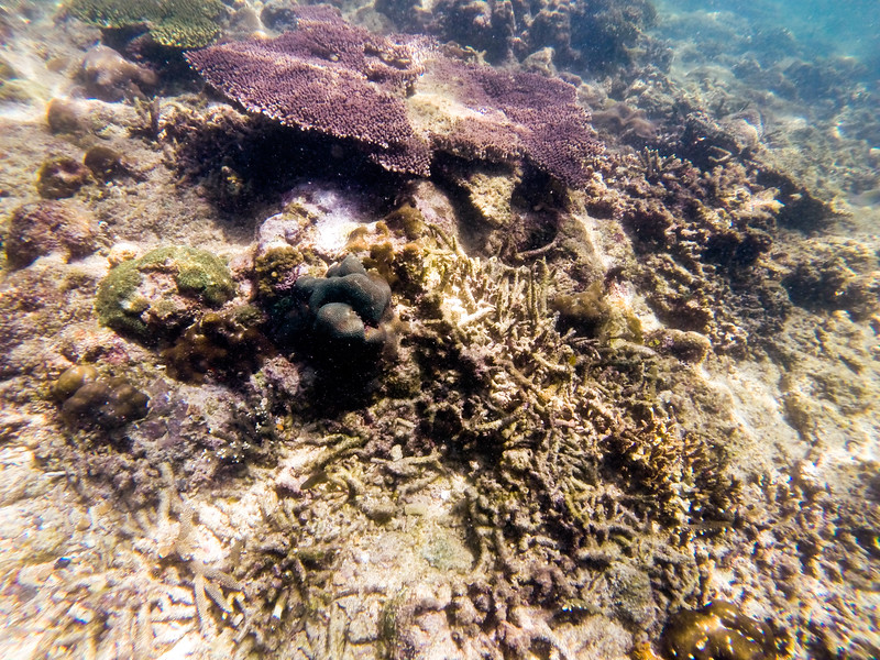 Dive in El Nido Series 3 Photograph 9