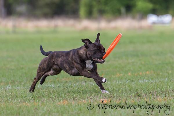 _MG_3319Up_dog_International_2016_StephaniellenPhotography.jpg