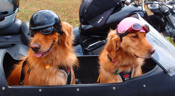 Dog Helmets