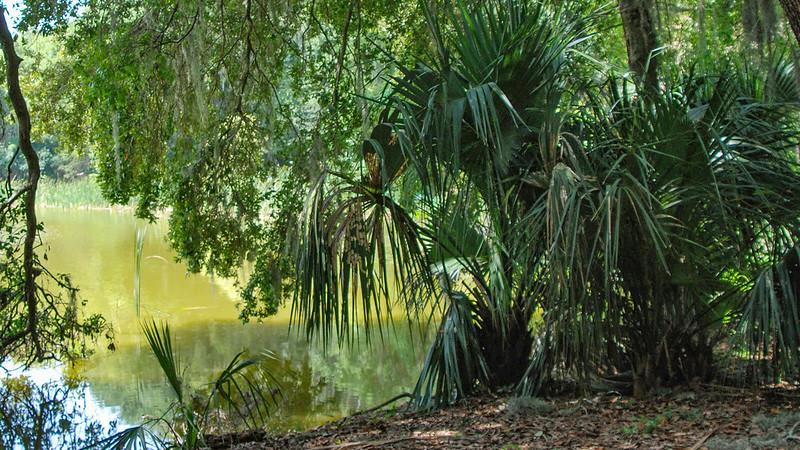 Trees along Lake Beauclair