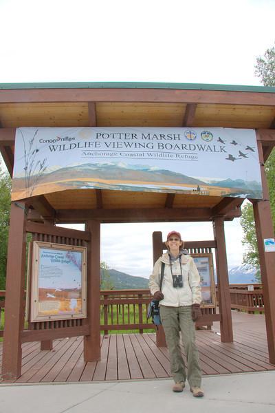Potter Marsh - Birders' Paradise!