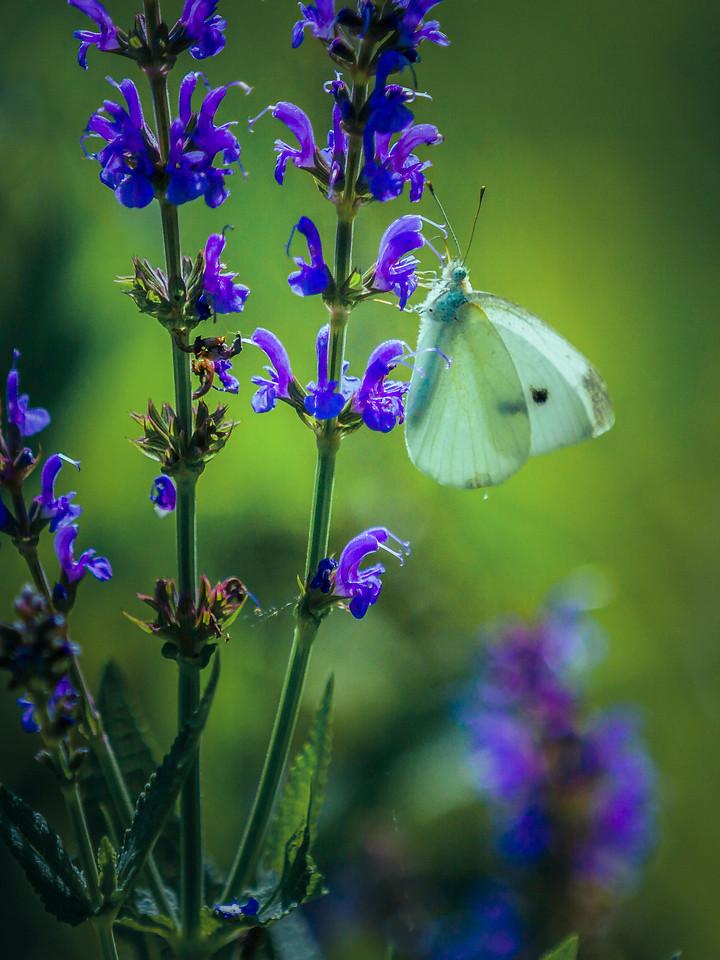 彩蝶,翩翩起舞