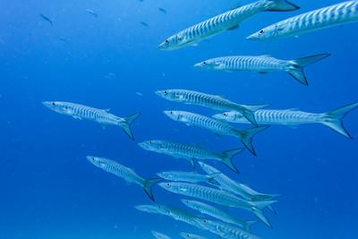 GREAT BERRIER REEF underwater