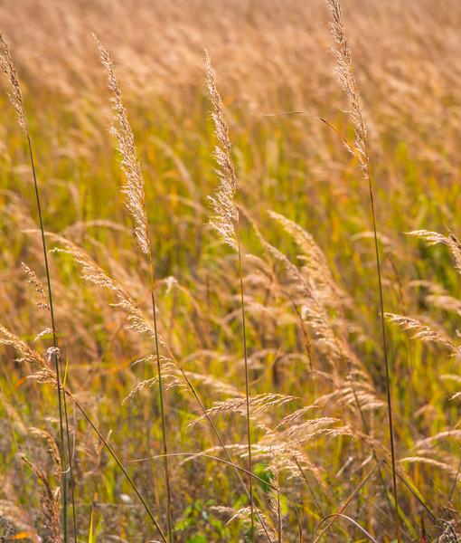 Prairie  14