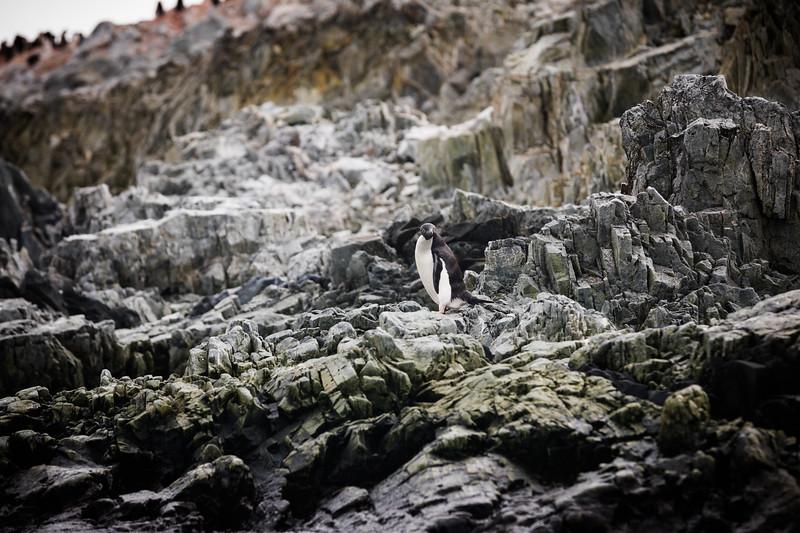 _MG_6832_20170122_Antarctica.jpg