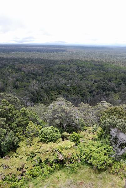 The Pu`u Maka`ala Natural Preserve, north side of Kulani Cone