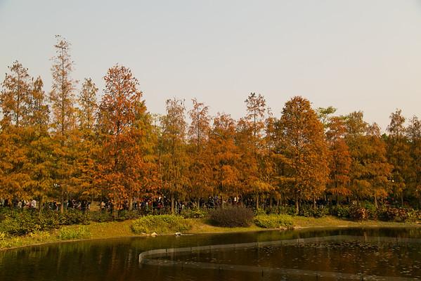 青衣公園 Tsing Yi Park