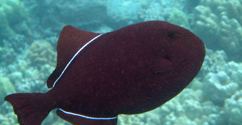 500- 20080416- Hawaii 20-Snorkelling IMG_0734.jpg