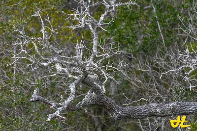 Croatan National Park