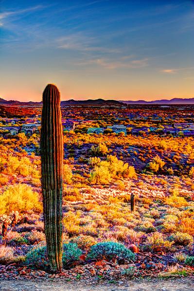 Phoenix_AZ(6).jpg