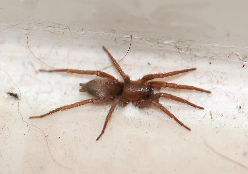 7167 Bathroom Spider.jpg