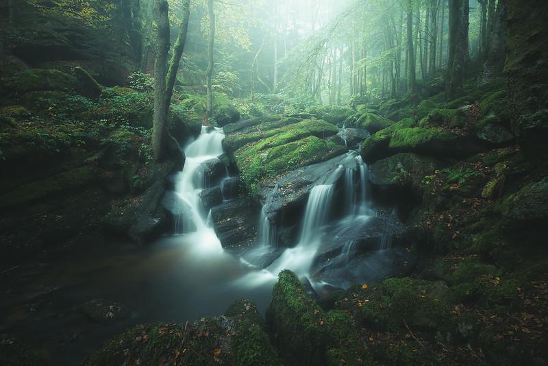 Beboy 23 Rain Forest