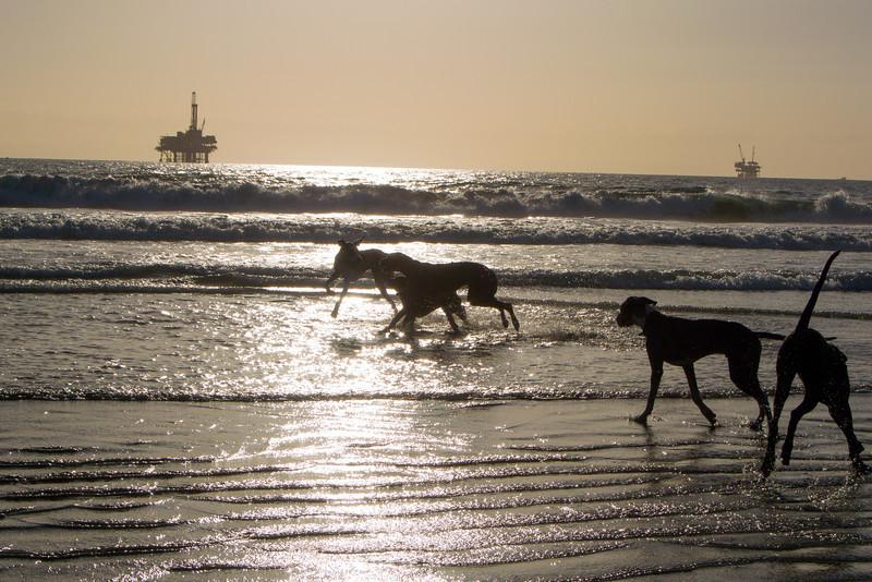 dogs_beach-27.jpg