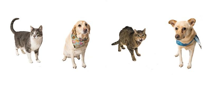 Haller Pet Photos