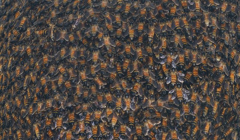 Bees-in-a-hive-amboli.jpg