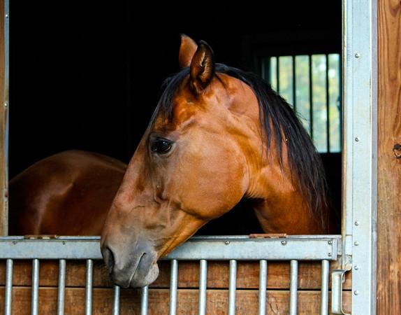 Horses,  Farm Animals,  Wildlife