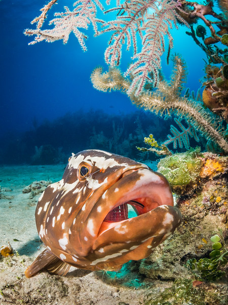 Sport Diver-33.jpg