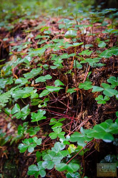 20141015_Redwoods_0059.jpg
