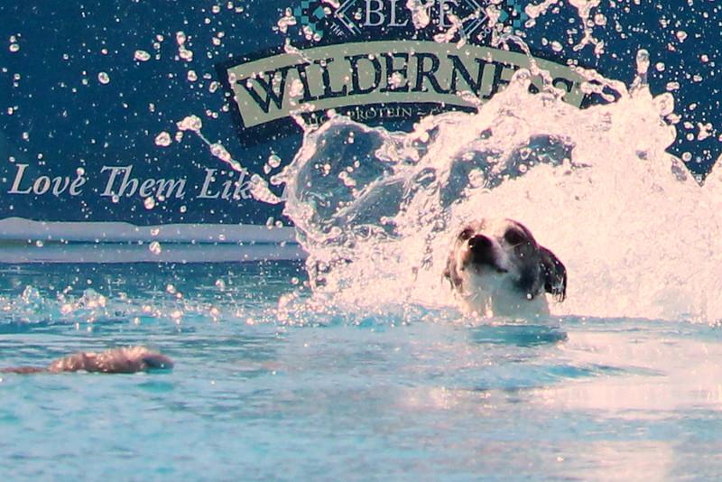 2015.8.6 Winnebago County Fair Dock Dogs (87).JPG