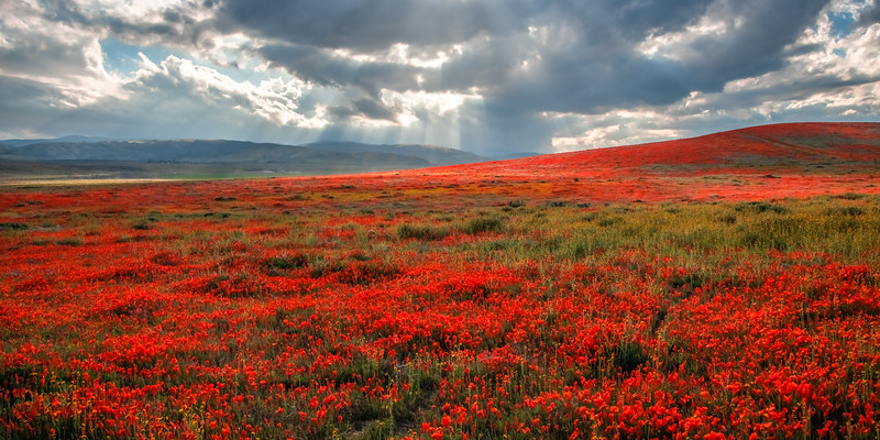 Poppy Reserve Spring Symphony #9 Antelope Valley Poppy Reserve Spring Storm God Rays Wild Flowers Super Bloom Fine Art Landscape Nature Photography!    California Wildflowers Superbloom!  Elliot McGucken Fine Art Landscape Nature Photography & Luxury Wall Art