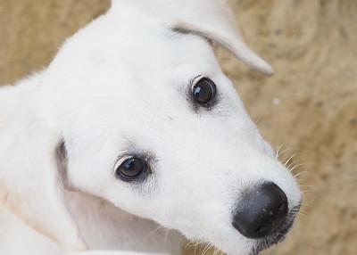 Marys Dogs 08112018