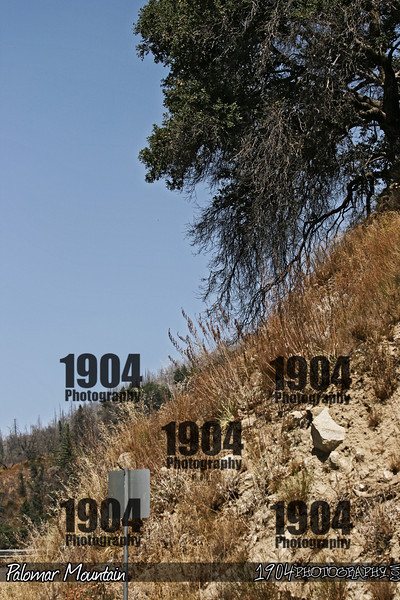 20090906_Palomar Mountain_0931.jpg