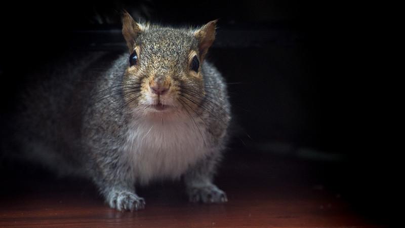 squirrel (1 of 2).jpg