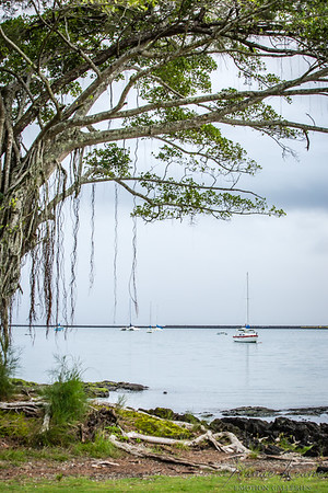 160500 Overcast Morning at Reeds Bay  Hilo